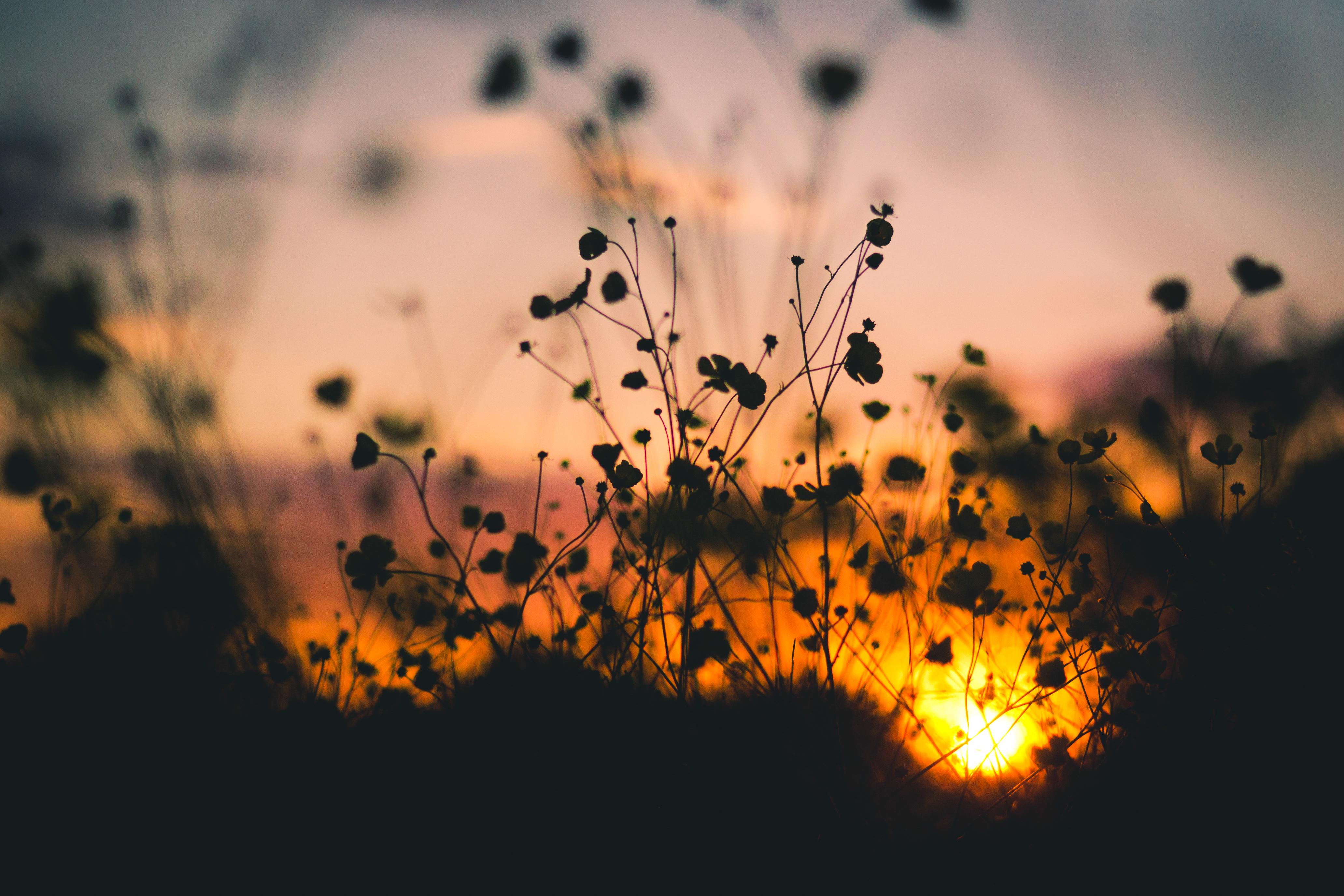 nature-sunset-flowers-silhouette